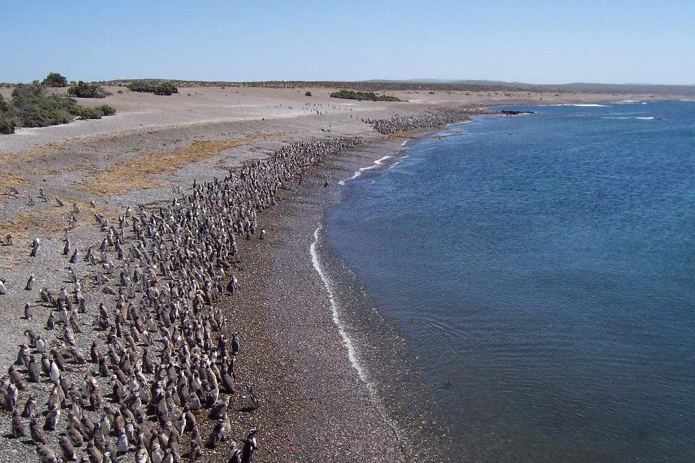 pinguins-na-patagonia.jpg